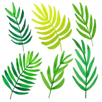 水彩の緑の葉。