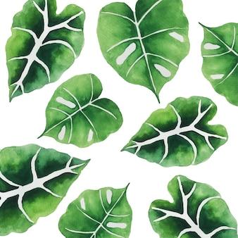 Акварель зеленые листья.