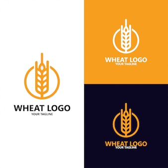 Роскошные зерна, сельское хозяйство пшеница зерна логотип шаблон вектор значок дизайн