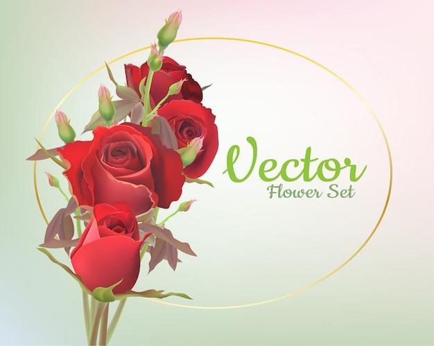 美しい赤いバラのベクトル