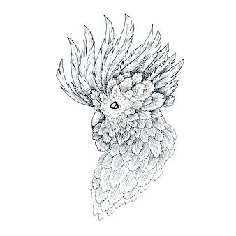 Иллюстрация попугая
