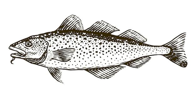Рыба треска векторная иллюстрация гравюра