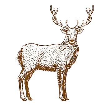 Мужской олень векторная иллюстрация гравюра