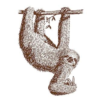 Ленивец висит векторная иллюстрация гравюры