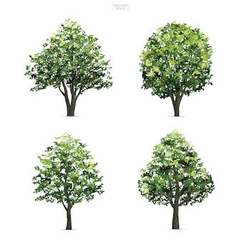 木のコレクション。