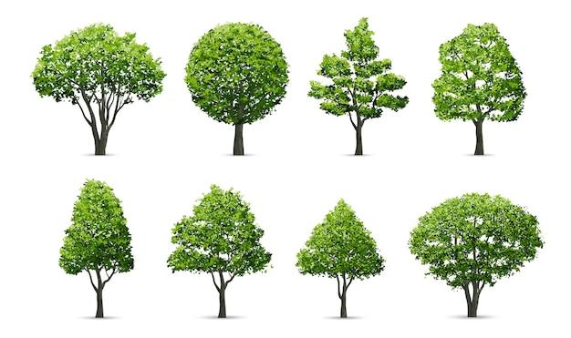 白い背景に隔離された木のコレクション。