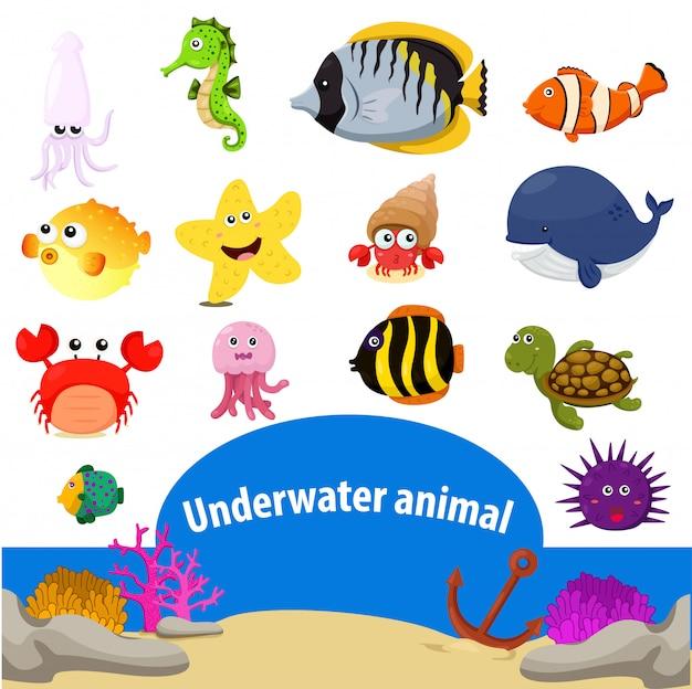 水中動物のイラストレーター