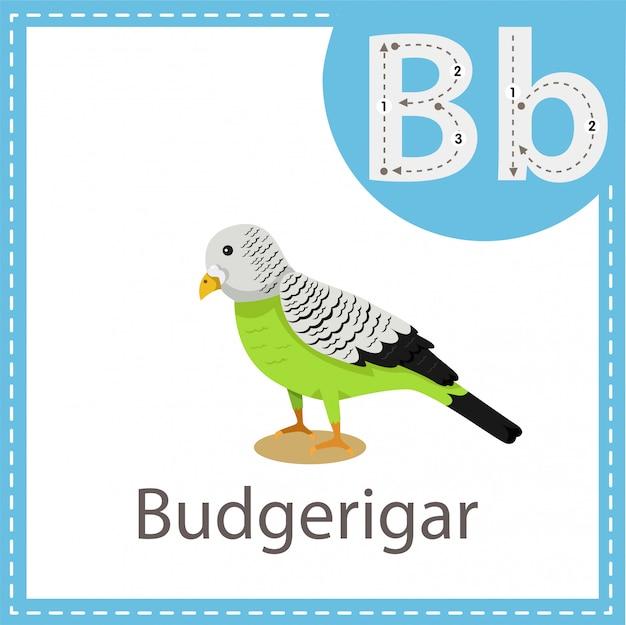 Иллюстратор птицы волнистого попугайчика