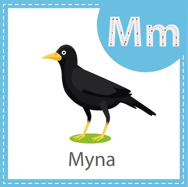 ミナ鳥のイラストレーター