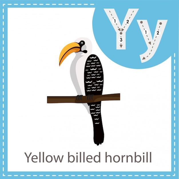 黄色請求サイチョウ鳥のイラストレーター