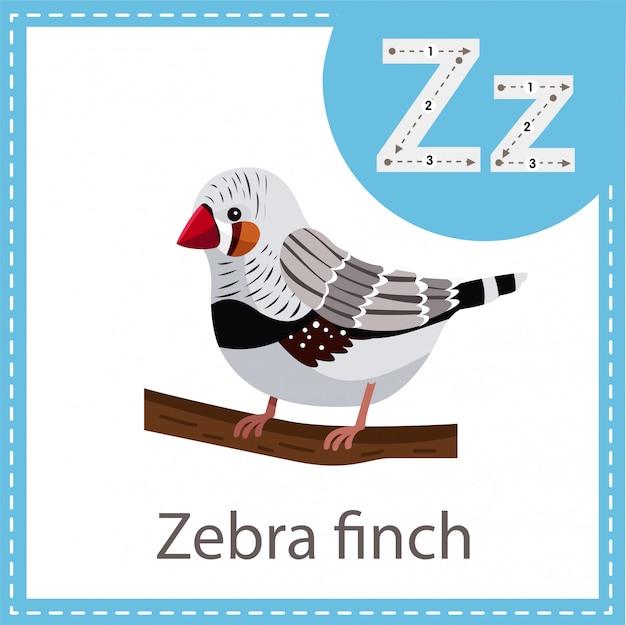 ゼブラフィンチ鳥のイラストレーター