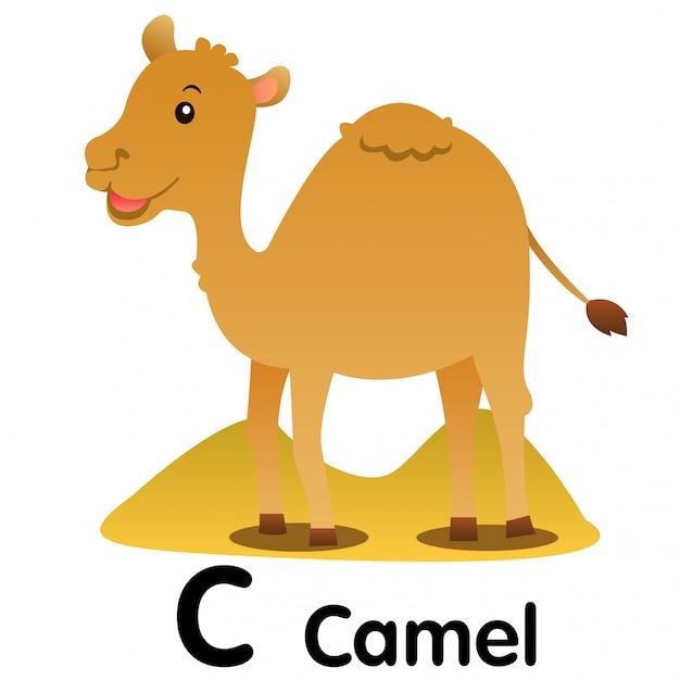 ラクダ動物のイラストレーター