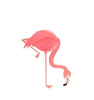 フラミンゴの鳥