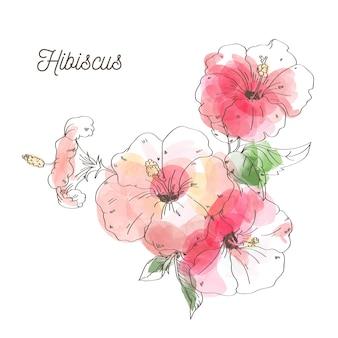 白い背景の上の高級ハイビスカスの花