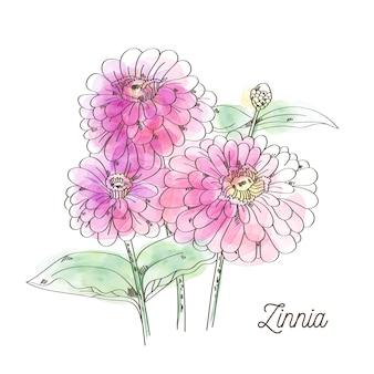 白い背景の上の美しいピンクの百日草