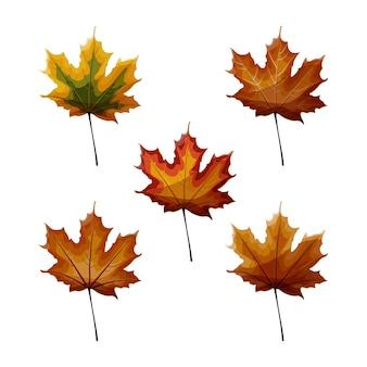 秋のカエデの葉のセット