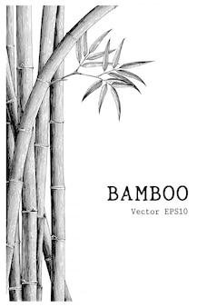 Бамбук фон ручной рисунок стиль гравировки