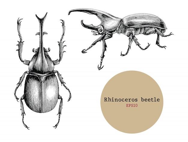 Рука жука носорога рисуя винтажную иллюстрацию гравировки, дизайн чертежа для татуировки