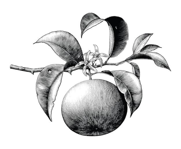 分離された黒と白の花のクリップアートとオレンジ色の枝のアンティーク植物彫刻イラスト
