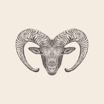 Иллюстрация горного козла, нарисованный рукой дизайн.