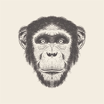 Нарисованный рукой вектор иллюстрации головы обезьяны.