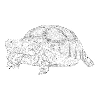 手描き亀イラスト