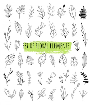 落書き、線のスタイルのベクトル花要素のセットです。異なる植物種