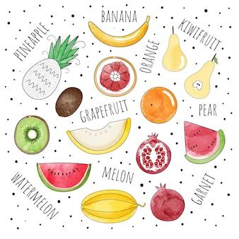 水彩のスタイルで果物のベクトルセット。