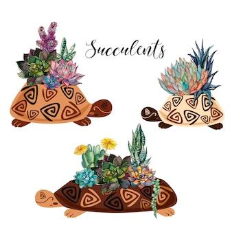Суккуленты в горшках в виде черепахи.