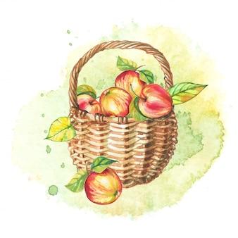 Осенний акварельный натюрморт. корзина яблок.