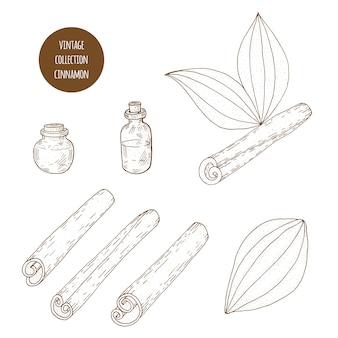シナモン。ベクターの手描きの化粧品植物のセットは、エッセンシャルオイルコンポーネント図を分離しました。アロマセラピー成分。自然の花の要素のコレクションをスケッチします。