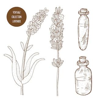 ラベンダー。分離された化粧品の植物のベクトル手描きセット。エッセンシャルオイルコンポーネントの図。アロマセラピー成分。自然の花の要素のコレクションをスケッチします。