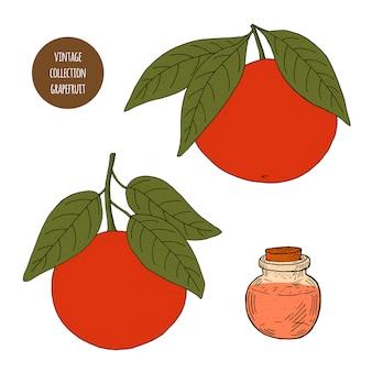 Цитрусовые. грейпфрут. вектор рисованной набор косметических растений, изолированных