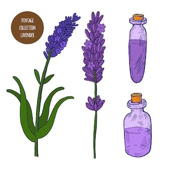 ラベンダー。分離された化粧品の植物のベクトル手描きセット