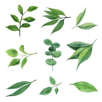 水彩の植物や葉。植物学のイラスト。