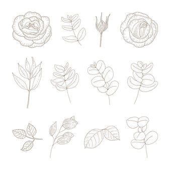 ヴィンテージの花のコレクション。スケッチスタイルの植物図。植物と花