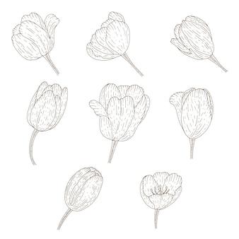 ビンテージチューリップコレクション。スケッチスタイルの植物図。
