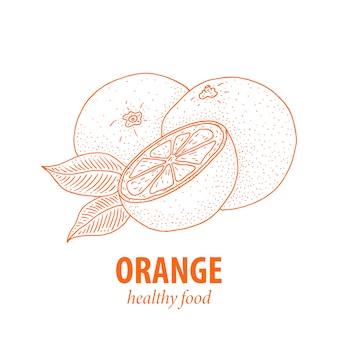 オレンジ。白で隔離されるヴィンテージの手描き植物