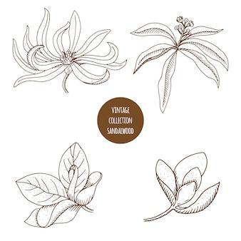 化粧品植物の手描きセット