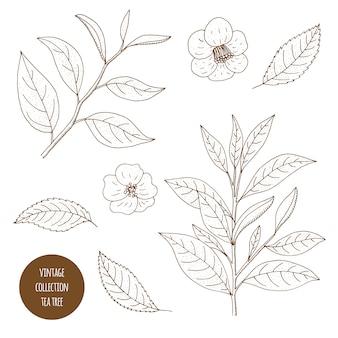白い背景で隔離の化粧品植物の手描きセット
