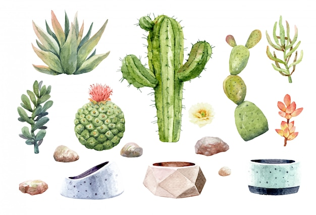 サボテンサボテン多肉植物と木の鍋で石。