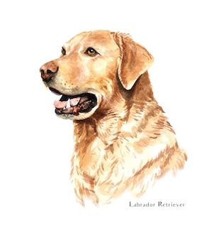 ラブラドールレトリーバー犬の水彩画。