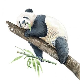 Акварельная панда ест бамбук на ветке
