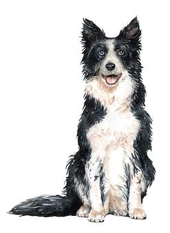 手描きボーダーコリー水彩犬。