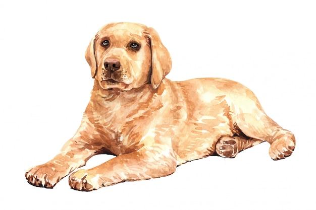 手描きのラブラドル・レトリーバー犬水彩犬。