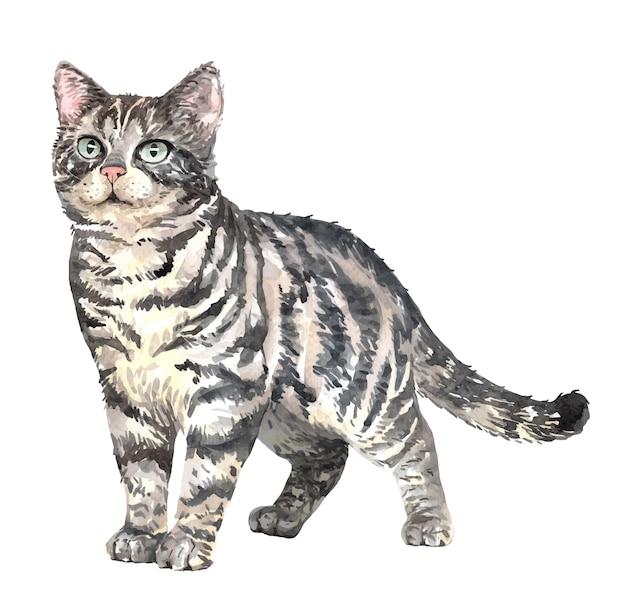 Акварельная кошка американская короткошерстная. краска акварельная кошка.