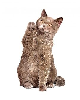 Акварельная кошка британская короткошерстная с поднятыми руками.