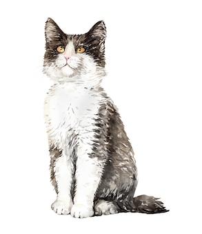 Акварельный кот норвежский лесной сидя.