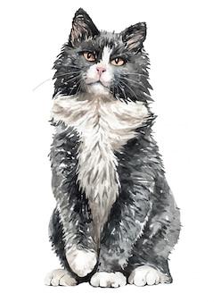 Акварель норвежская лесная кошка сидит. краска акварельная кошка.