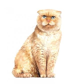 Акварель шотландская вислоухая кошка сидит. краска акварельная кошка.